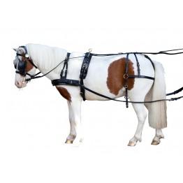 Enovprega BERTA za šetlandske ponije