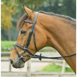 Bridle ALLROUND